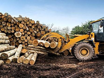 制造实木地板所用的原木来源