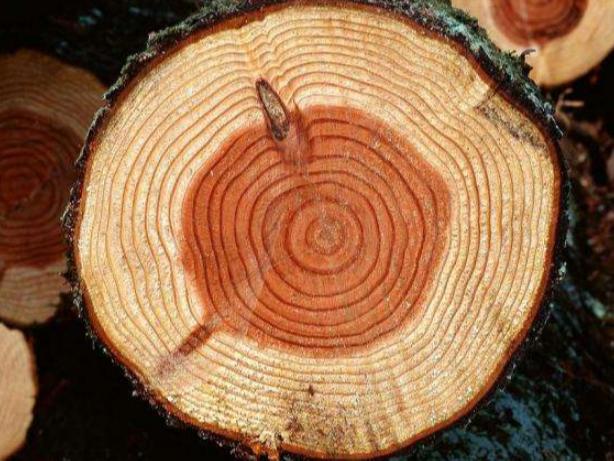 实木地板的木种有哪些?